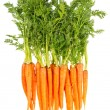 Fresh carrots with green leaves isolated on white — Stock Photo #24432553