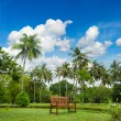 Beautiful tropical garden with palm trees — Stockfoto