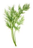 крупным планом листьев травы укропа, изолированные на белом — Стоковое фото
