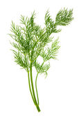 Closeup of dill herb leaf isolated on white — Stock Photo