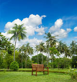 Beautiful tropical garden with palm trees — Stock Photo