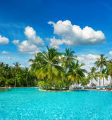 Swimming pool with palm trees and blue sky — Stock Photo