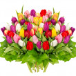 Stock Photo: Fresh colorful tulips over white