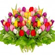 Fresh colorful tulips over white — Stock Photo