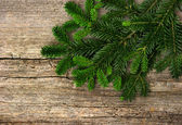 Fir tree branch on rustic wooden background — Stock Photo