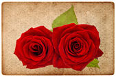 Vintage card board with red roses — Stock Photo