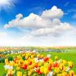 Tulip flowers field. spring landscape — Stock Photo #25082329