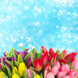 Bouquet of multicolor tulips over blurred blue — Stock Photo