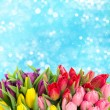 Stock Photo: Bouquet of multicolor tulips over blurred blue