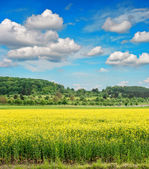 Rapeseed field over cloudy blue sky — Stock Photo
