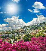 Mediterranean landscape with azalea flowers — Stock Photo