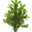 Branch of christmas tree isolated on white — 图库照片