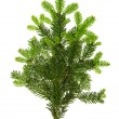 Branch of christmas tree isolated on white — Stockfoto
