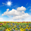 Colorful flowers meadow and green grass field over blue sky — Stock Photo