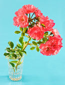 Bouquet of pink wild roses over blue background — Stock Photo