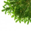 Border from green christmas tree branch isolated on white — Zdjęcie stockowe