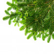 Border from green christmas tree branch isolated on white — Stock Photo