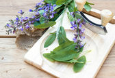 Sage leaves and blossoms — Stock Photo