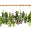 Varios fresh herbs — Stock Photo #31239399