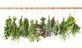 Varios fresh herbs — Stock Photo