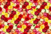 Verse geassorteerde rozen — Stockfoto