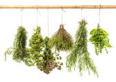 Hanging bunches of fresh herbs — Stock Photo