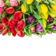 Bunch of fresh spring tulip flowers — Stock Photo