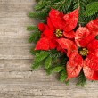 Christmas tree branch with poinsettia on wooden background — Stock fotografie