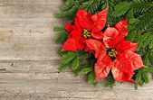 Christmas tree branch with poinsettia on wooden background — Stock Photo