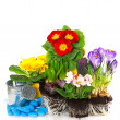 Stock Photo: Spring flowers primula, crocus and hyacinth on white