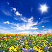 Beautiful flowers meadow and cloudy blue sky — Stock Photo