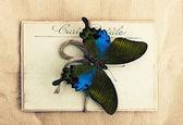 Hermosa mariposa y viejas postales — Foto de Stock