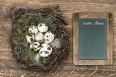 Birds eggs in nest on wooden background with blackboard — Stock Photo