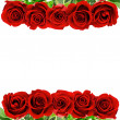 Red rose flowers — Stock Photo #41293113