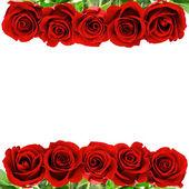Fiori rose rosse — Foto Stock