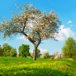 Blossoming apple tree over cloudy blue sky — Stock Photo
