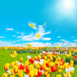 Tulip flowers in green grass. sunny blue sky — Stock Photo #41311549