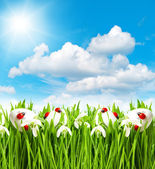 Green grass with snowdrops and easter eggs — Stock Photo