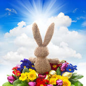 Easter bunny with eggs and flowers on blue sky — Stock Photo