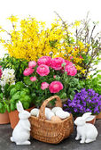 easter bunny couple and spring flowers decoration — Stock Photo
