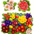 Stock Photo: Primula flowers with easter eggs decoration