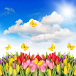 Tulip flowers with blue sky and butterflies — Stock Photo #41764463