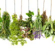Herbs hanging isolated on white. food ingredients — Stock Photo