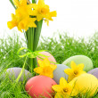 Easter eggs and daffodils flowers in grass — Stock Photo #42953527