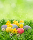 Easter eggs and daffodils flowers in grass — Foto Stock