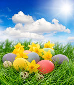 Easter eggs and flowers in grass with blue sky — Stock Photo