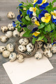 Pansy flowers, quail eggs and greeting card — Stock Photo