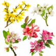Blossoms of apple tree, cherry twig, pear, forsythia — Stock Photo