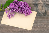 Lilac flowers on wooden background — Stock fotografie