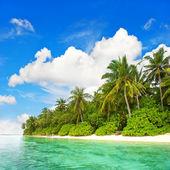 Tropical island beach. green palm trees and blue sky — Stock Photo